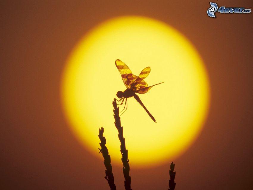 libélula, silueta, hierba, sol