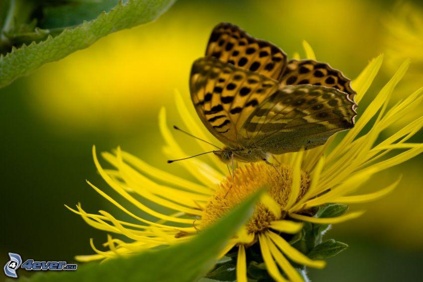 mariposa, flor amarilla