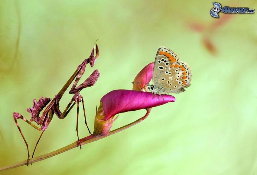 mariposa, flor púrpura