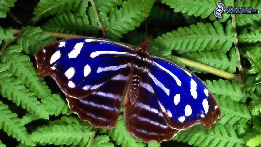 mariposa, helechos