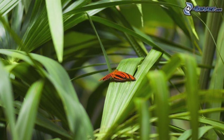 mariposa, paja de hierba