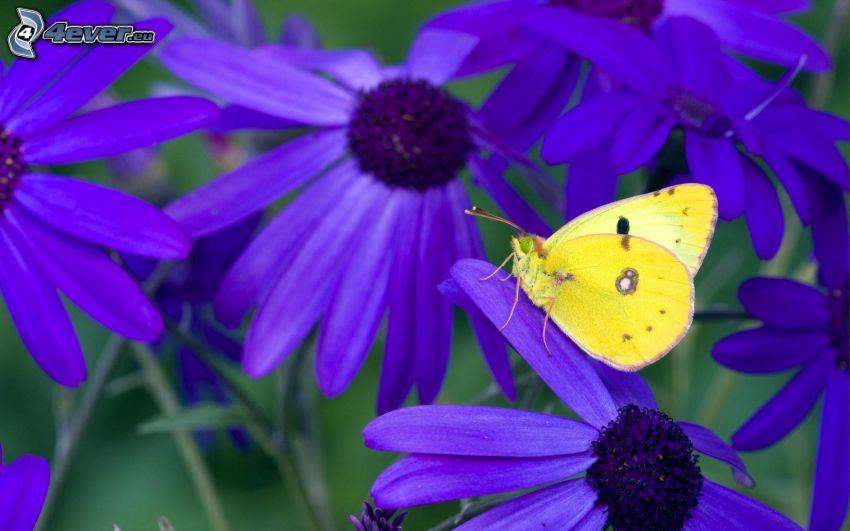 mariposa amarilla, mariposa sobre una flor, flores de color azul
