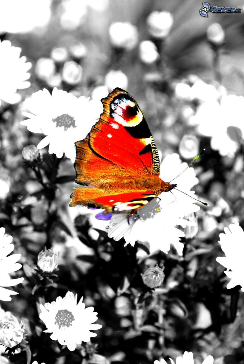 mariposa colorida, flores