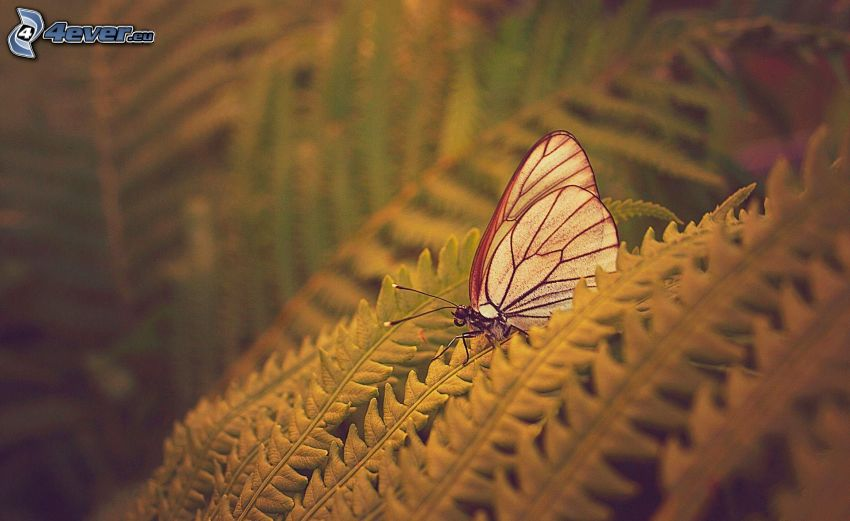 mariposa en hojas