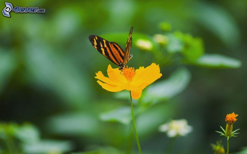 mariposa sobre una flor, flor amarilla