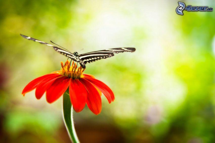 mariposa sobre una flor, flor de naranja