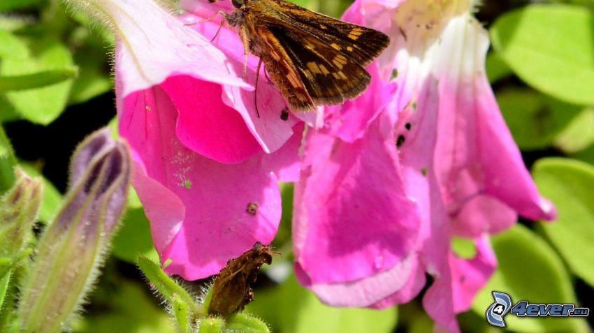 mariposa sobre una flor, flor púrpura