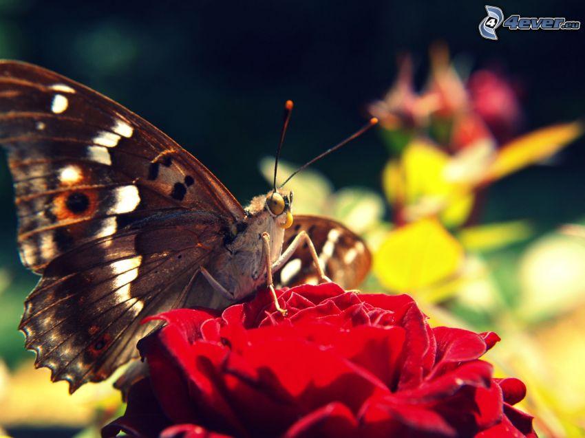 mariposa sobre una flor, flor roja, macro