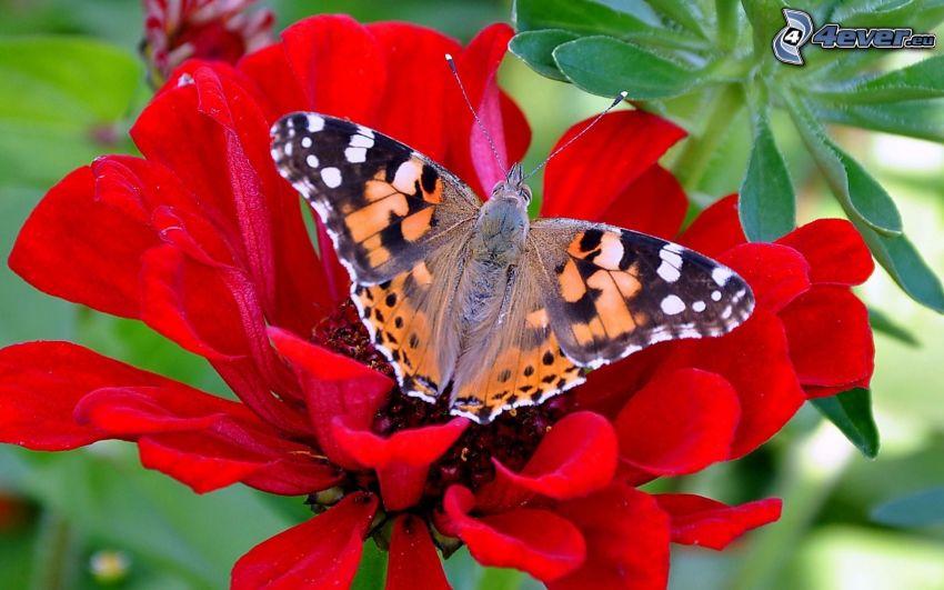 mariposa sobre una flor, flor roja