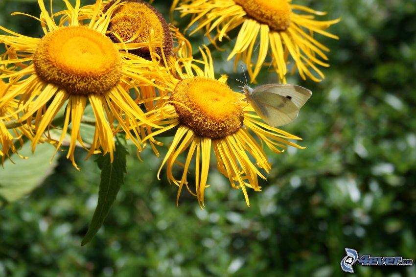 mariposa sobre una flor, flores amarillas