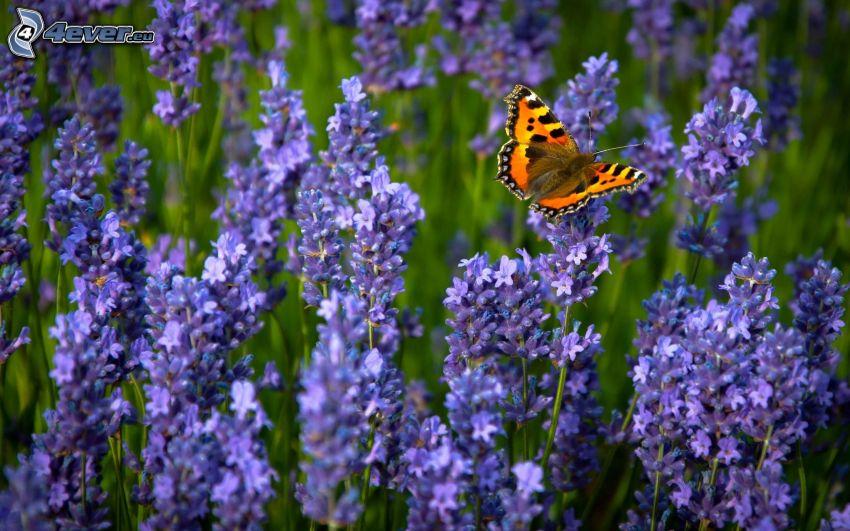 mariposa sobre una flor, flores de color azul