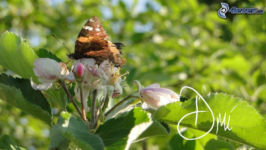 mariposa sobre una flor