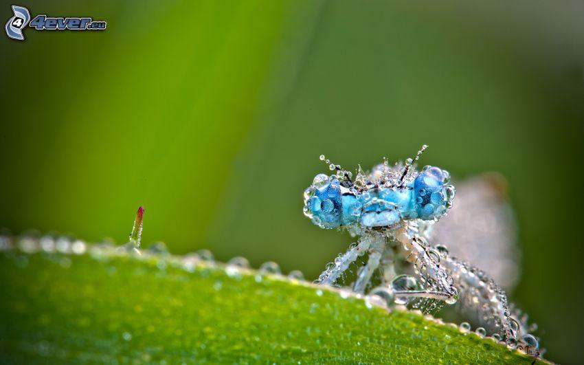 mosca, gotas de agua, hoja verde, macro