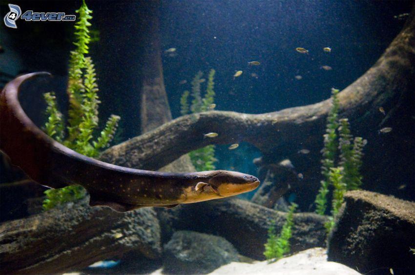 anguila, fondo del mar, plantas