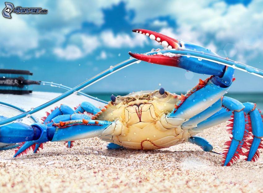cangrejo, cable, playa de arena
