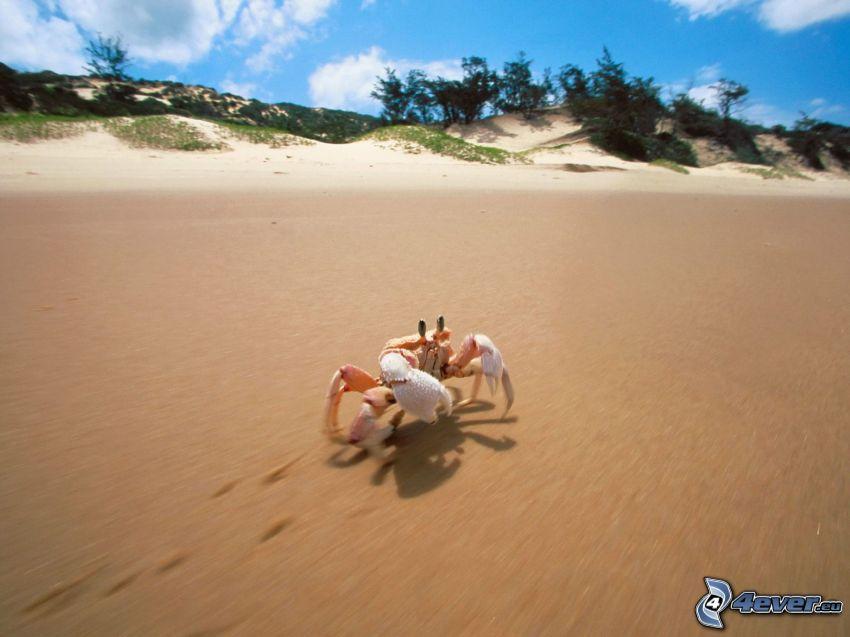 cangrejo en la playa, huellas en la arena
