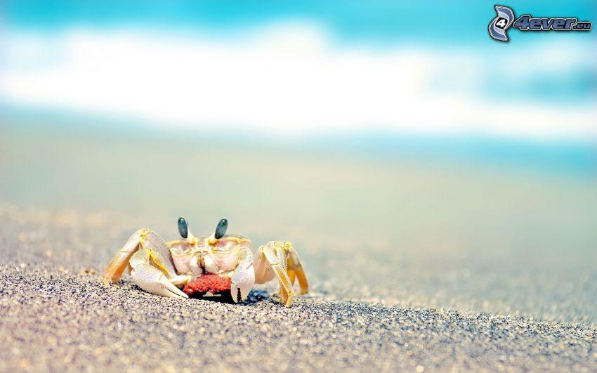 cangrejo en la playa, piedras