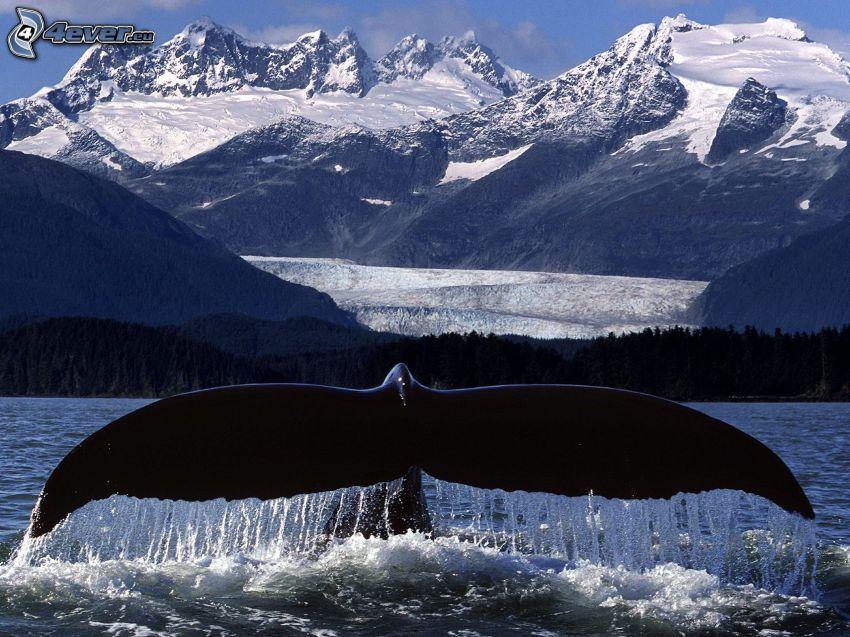 cola de orca, colinas cubiertas de nieve