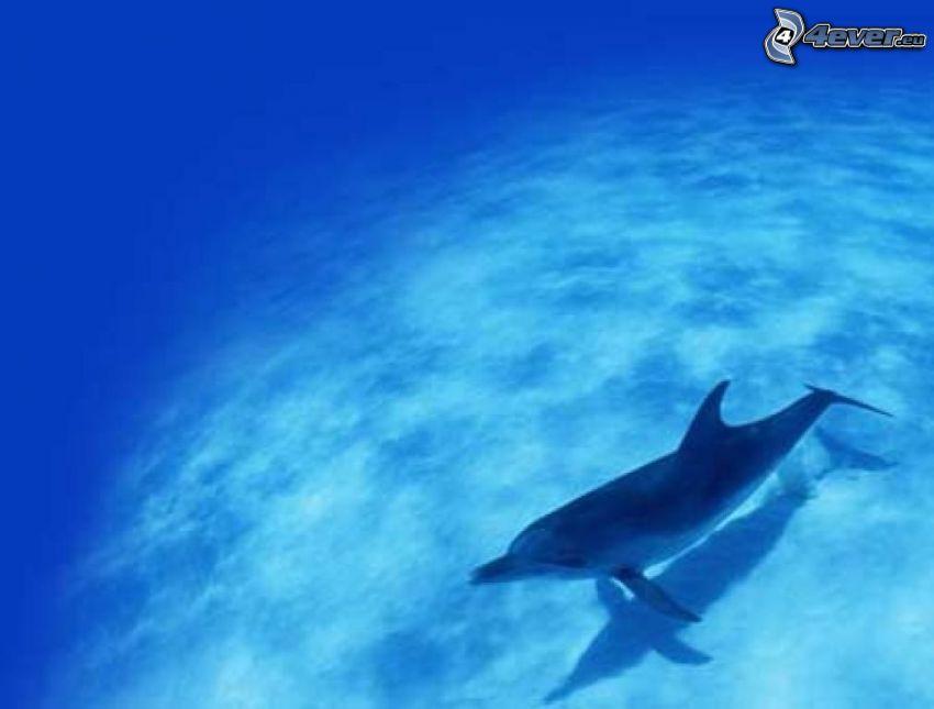 delfín, mar, agua