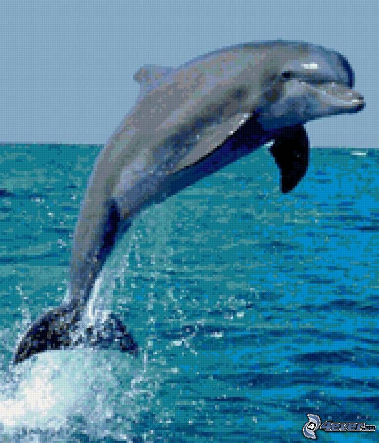 delfín, salto, mosaico