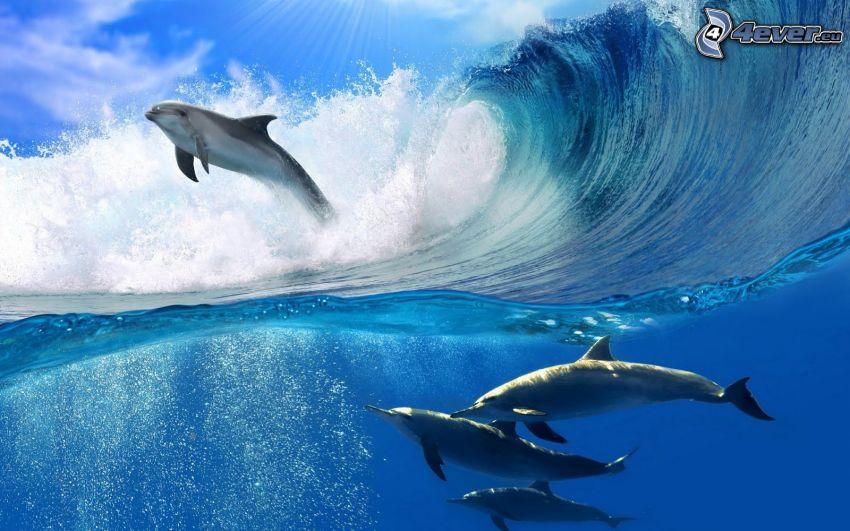 delfines, ola