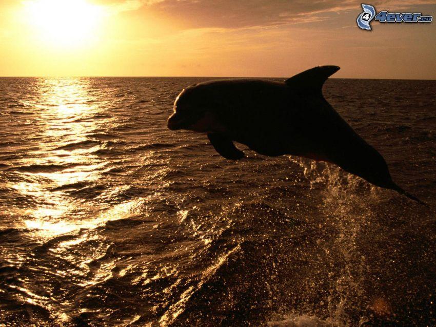 delfines saltando, puesta de sol sobre el mar