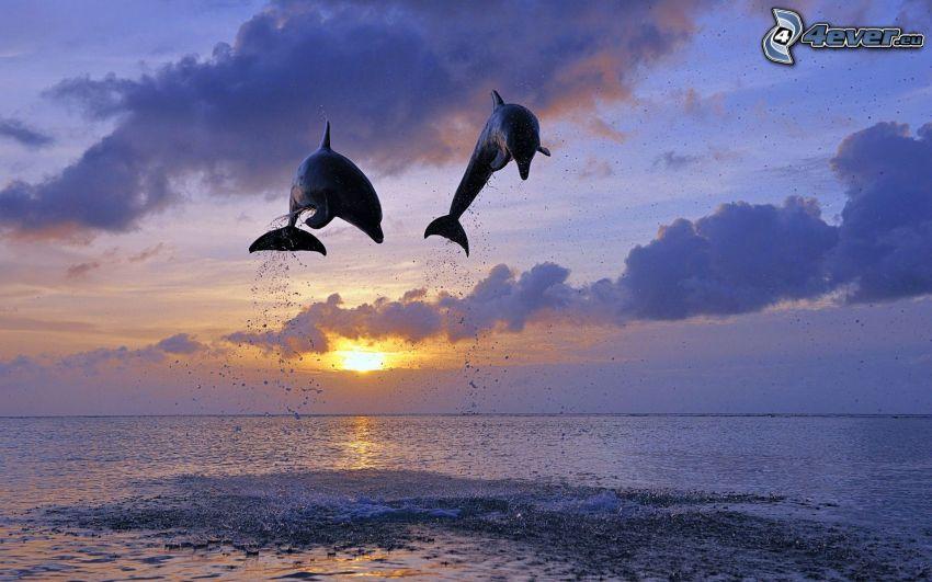 delfines saltando, puesta del sol