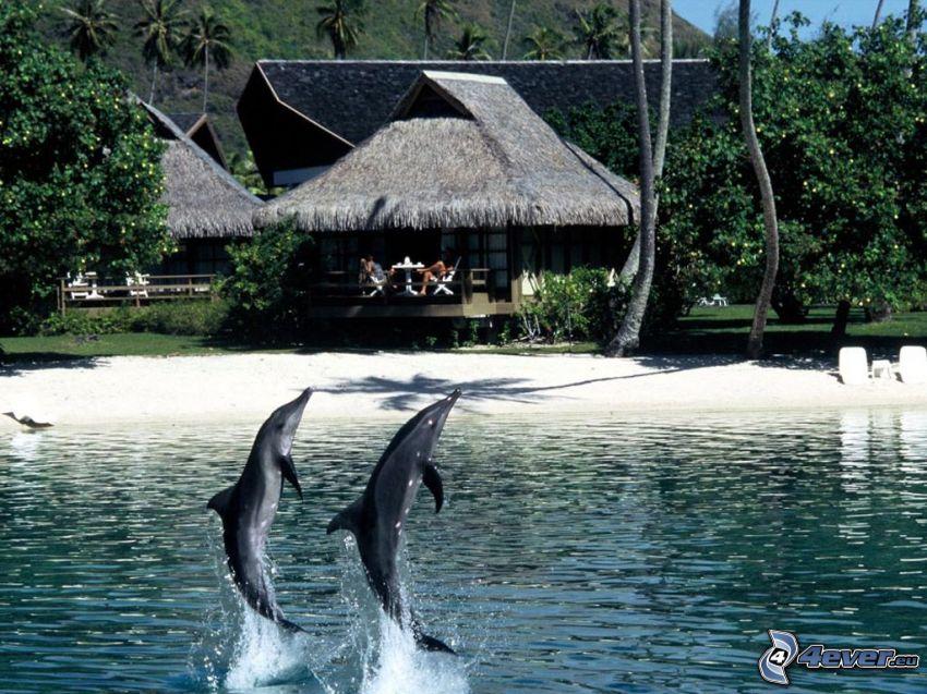 delfines saltando, trópico, cabaña, costa, playa