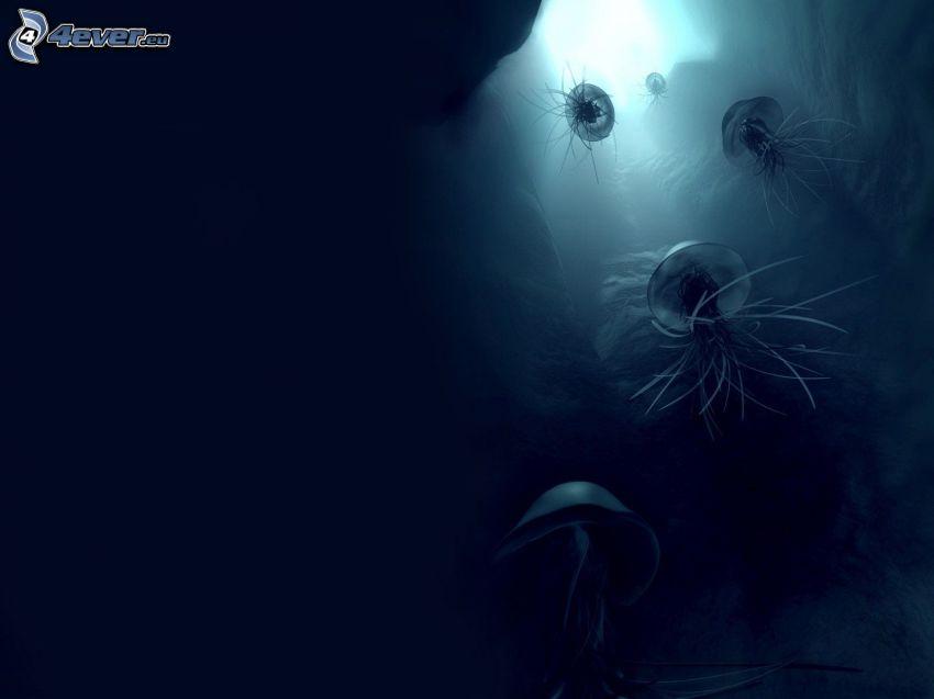 medusas, mar