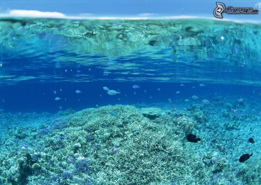 peces, corales marinos, agua azul