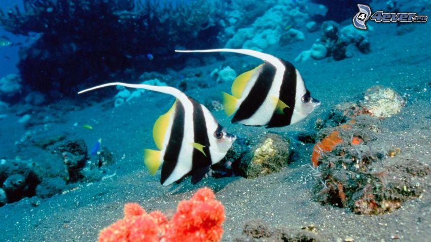 peces, corales marinos