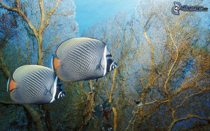 peces, plantas, corales marinos