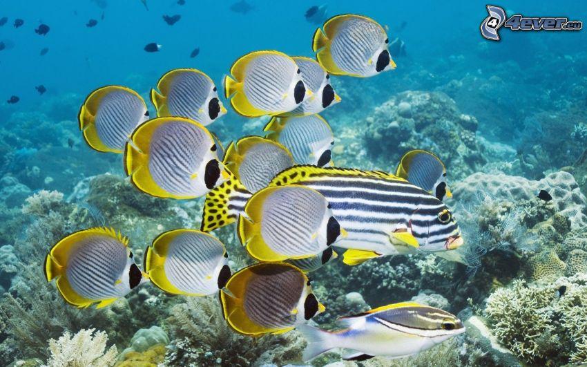 peces de colores, agua, corales marinos