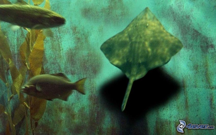 raya marina, peces