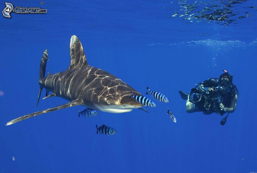 tiburón y buceador, peces