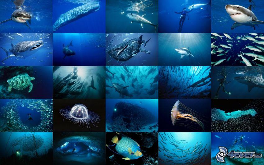 tiburones, océano, collage, buceador