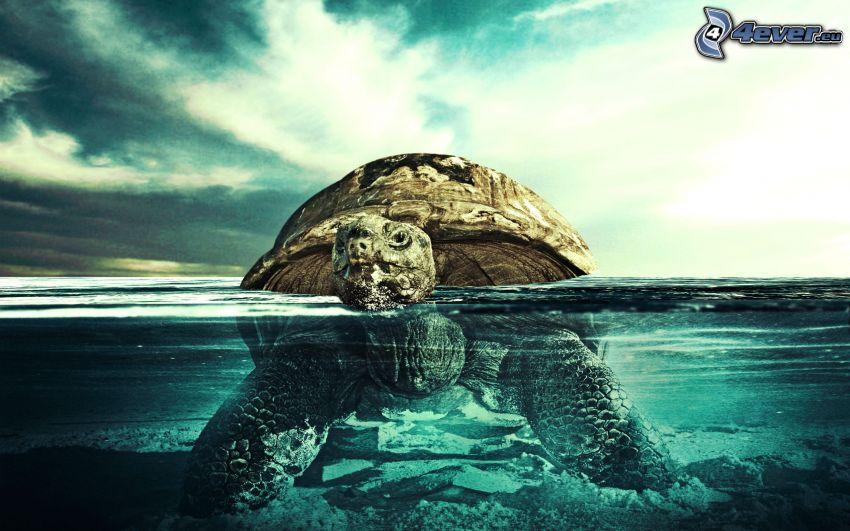 tortuga marina, mar