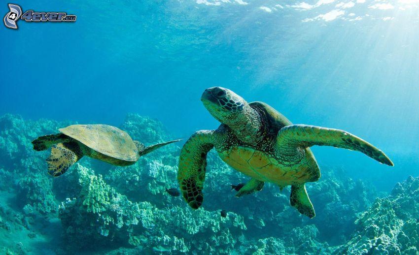 tortuga marina, rayos de sol