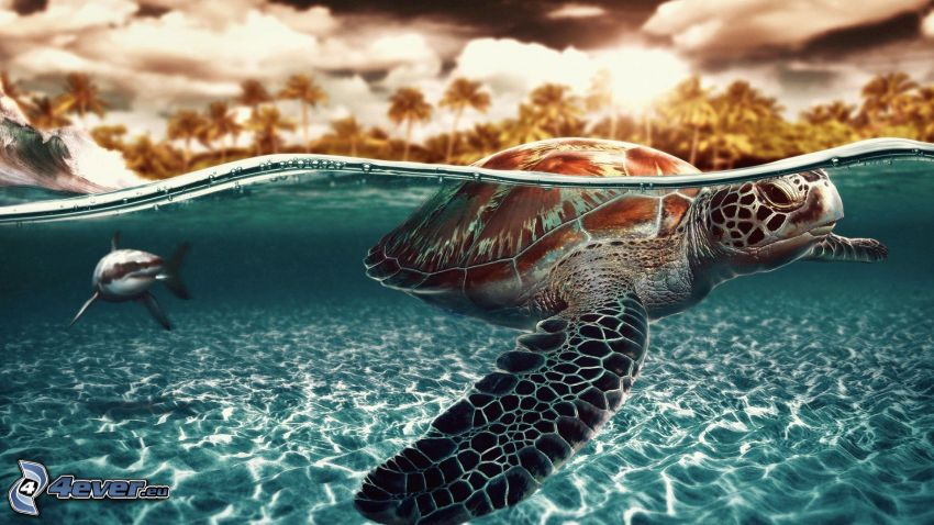 tortuga marina, tiburón, mar