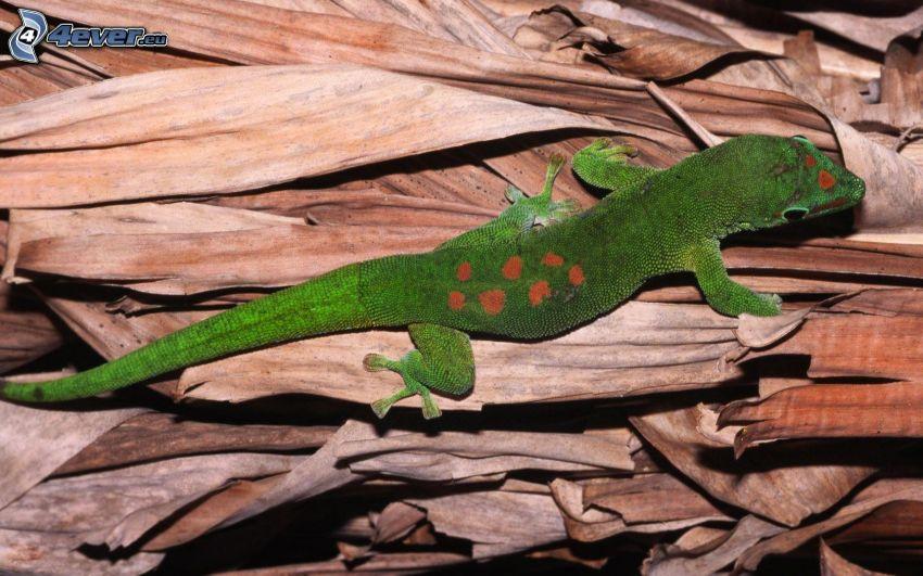 lagarto, hojas secas