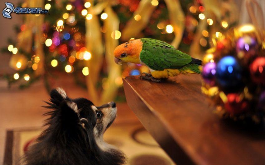 loro, perro, árbol de Navidad