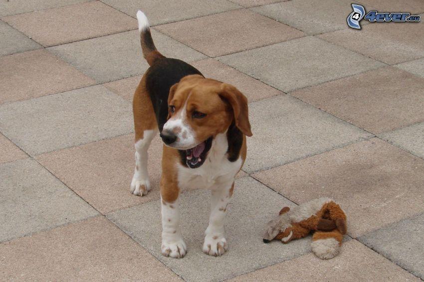 beagle, peluche