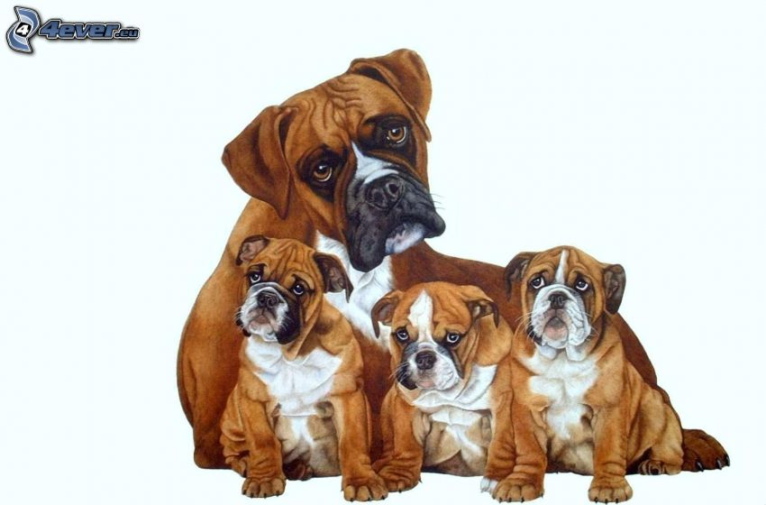 Boxer, cachorros de boxer