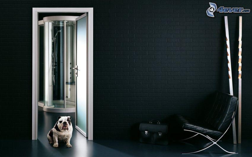 Bulldog Inglés, cuarto de baño, silla, puerta