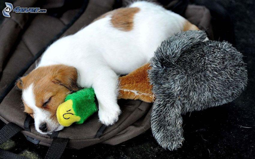 cachorro durmiendo, peluche