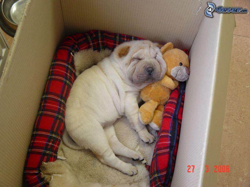 cachorros Sharpei, caja, cachorro durmiendo