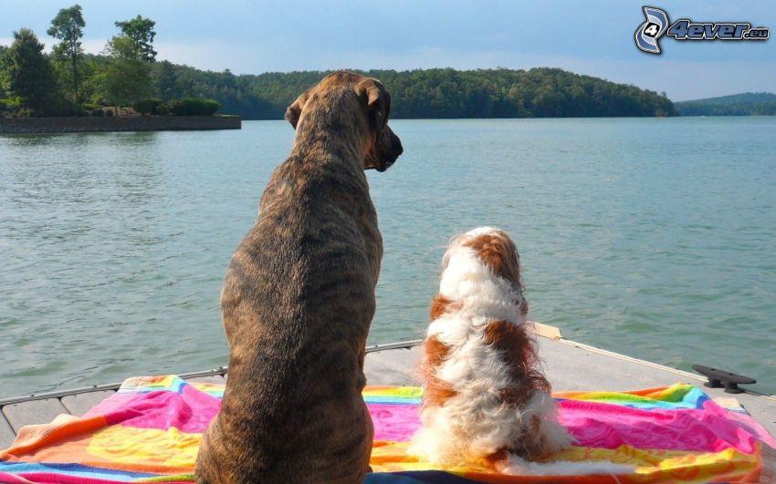 dos perros, lago