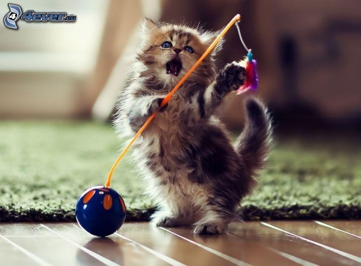 gatito con ganas de jugar, juguete