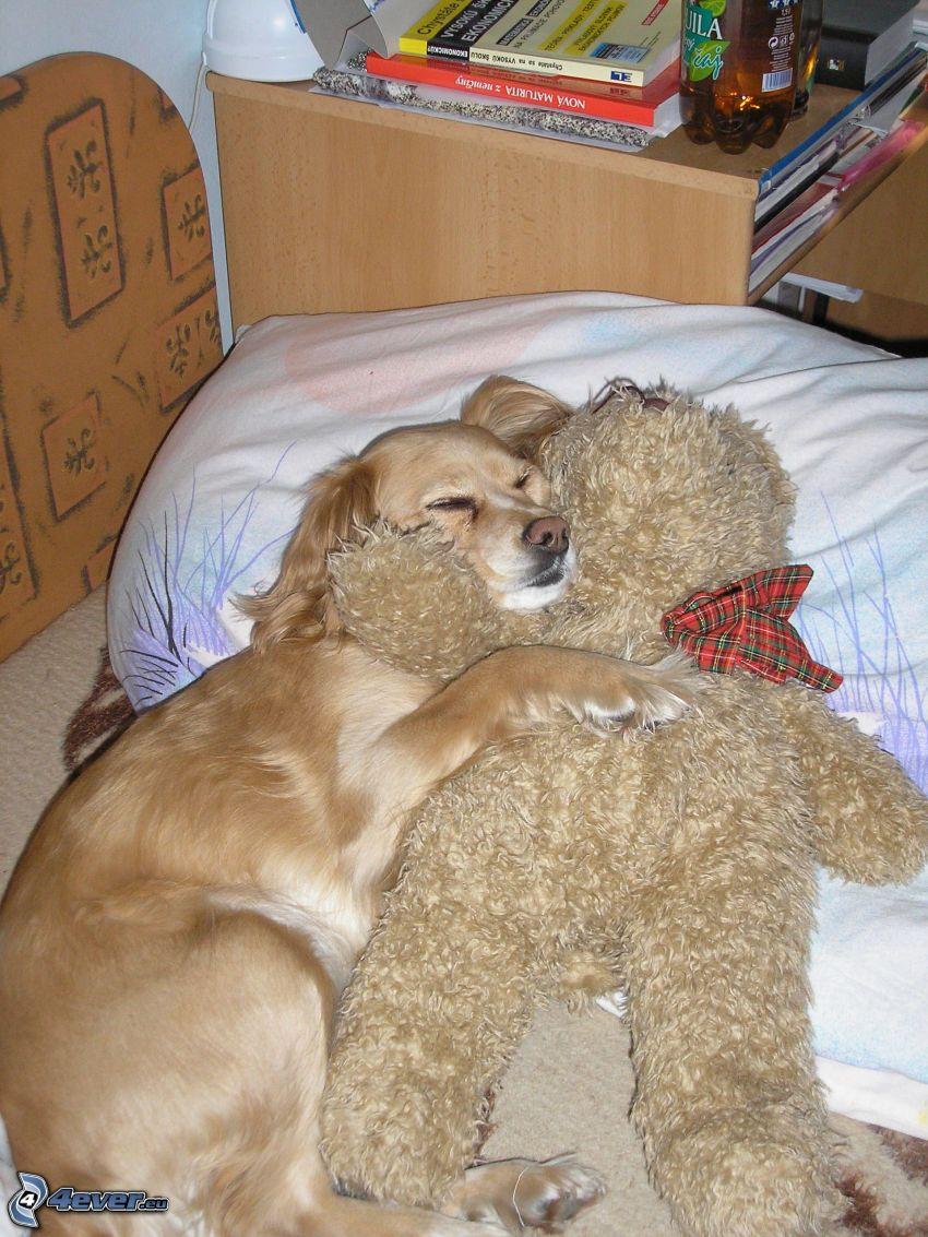 golden retriever, perro en la cama, oso de peluche