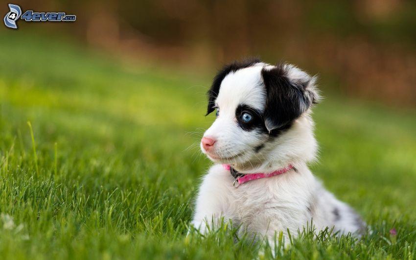 pequeño perrito blanco, hierba